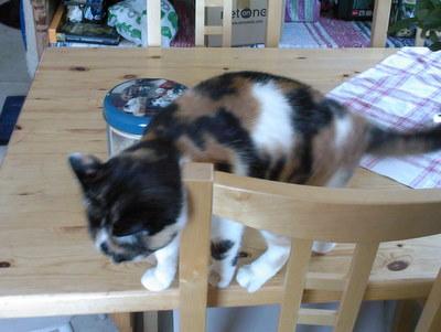 Kattburk bakom katt
