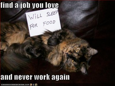 funny-pictures-your-cat-will-sleep-for-food