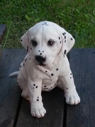 Dalmatinervalp