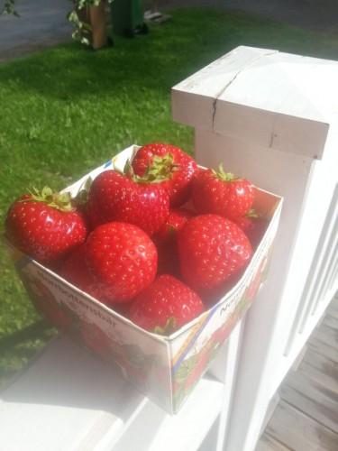 150808-jordgubbar